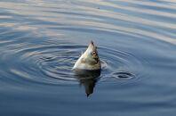 Правила ловли карасей на озерах в весенний период