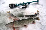 Особенности февральской рыбалки на щуку