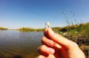 Правильно отваренная перловка — залог богатого улова карасей