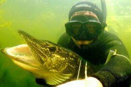 Правила подводной охоты на щуку