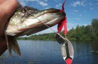 ТОП приманок для летней рыбалки на щуку