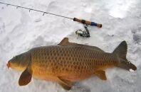 Карп в зимний период: особенности рыбалки