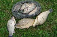 Карась в летнюю пору: что нужно для удачной рыбалки