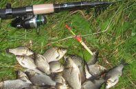 Карась в начале лета или как рыбачить с поплавочной удочкой