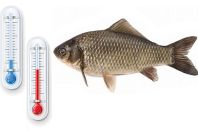 Влияние температуры водоема на клев карася