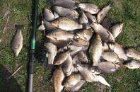 Пособие по карасиной рыбалке для начинающих и рекомендации опытным рыболовам