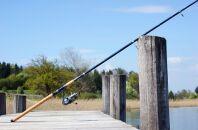 Полезные советы по ловле на поплавок