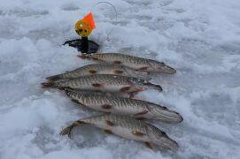 Места для зимней ловли щуки