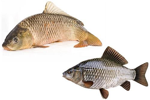 голова у рыб