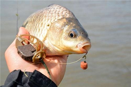 видео ловля рыбы на кормушку метод