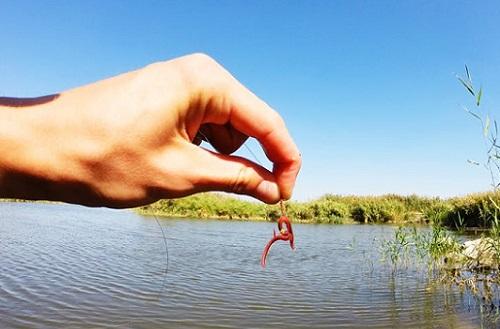 красный червь на крючке