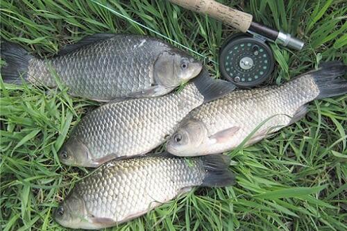 правила рыбалки летом