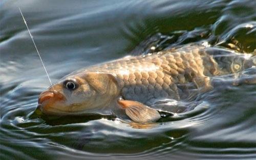рыбалка при нересте