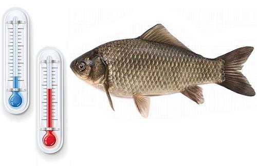 Температурный режим воды