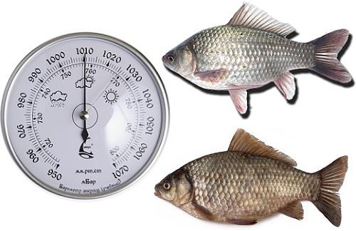 при каком давлении клюет рыба а при каком не клюет