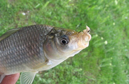 где клюет рыба в свердловской области сегодня
