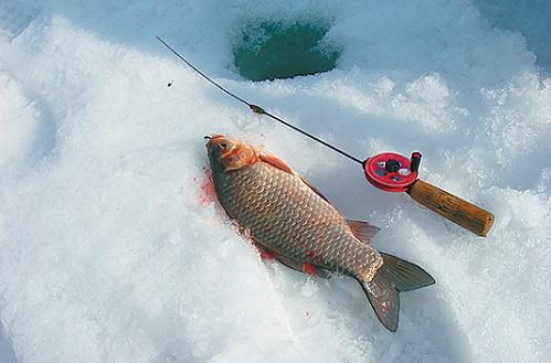 зимняя рыбалка карася
