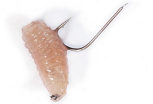 как насадить червя на крючок для ловли карася