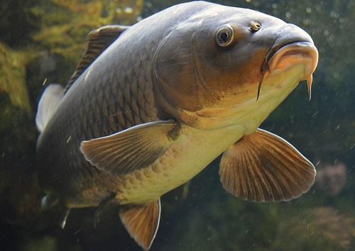 Ловля карпа осенью: правила выбора места для рыбалки и снастей