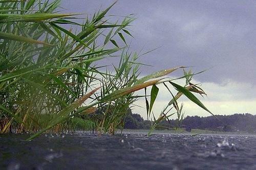 дождь на озере