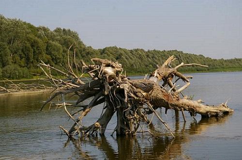коряги на реке