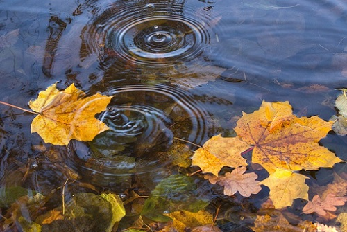 листья на реке