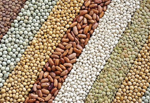 зерна