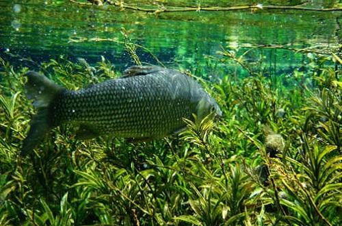 водоросли в реке