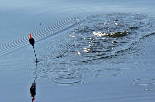 поплавок